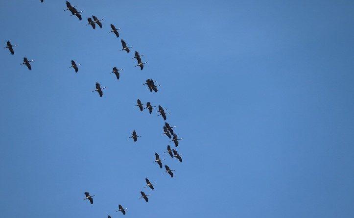 World Migratory Bird Day: birds globally threatened by plastic waste